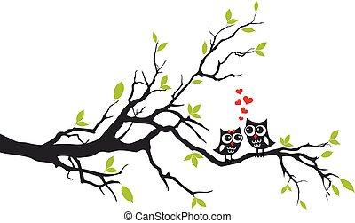 Búhos enamorados en el árbol, vector