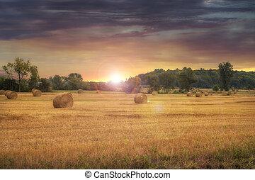 balas, heno, paisaje., campo, ocaso, recientemente, fondo., hermoso, campo