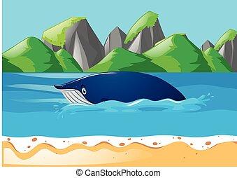 Ballena azul nadando en el océano