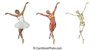 ballet, overlays, -, anatómico