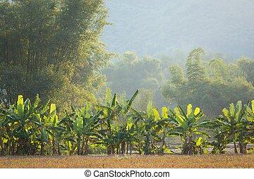 Bananas y bambúes