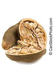 baobab, aislado, fruta