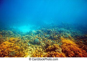 barrera coralina, mar rojo