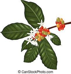 bayas de café y flores