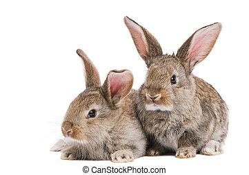 bebé, blanco, conejos, dos, aislado