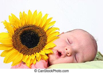 bebé, girasol