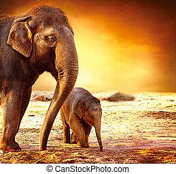 bebé, madre, aire libre, elefante