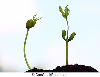 bebé, neem, plantas