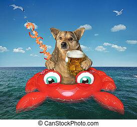 bebidas, inflable, cangrejo, cerveza, perro