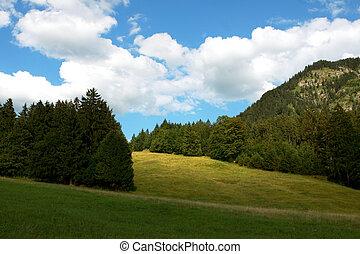 Belleza alpina