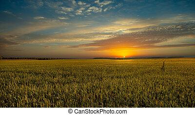 belleza, paisaje, campo, ocaso, trigo