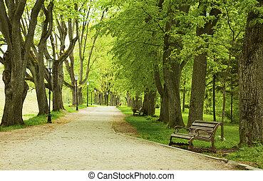 Bench en el parque de primavera