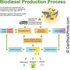 biodiesel, producción, process.