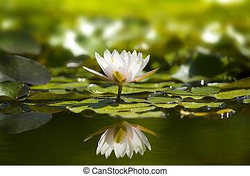 Blancas en el estanque natural.