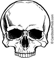 blanco, negro, cráneo humano