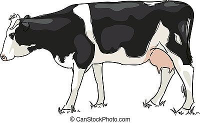 blanco, negro, vaca, pació