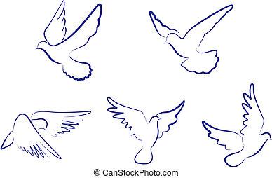 blanco, palomas