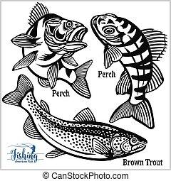 blanco, pesca, marrón, estados unidos de américa, percha, trucha, -, aislado
