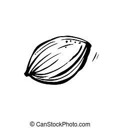 blanco, piedra, illustration., hand-drawn, fondo., albaricoque, vector