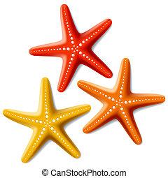 blanco, starfishes, tres