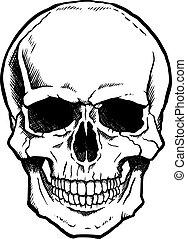 Blanco y negro cráneo humano con mandíbula