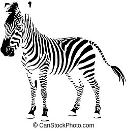 blanco, zebra