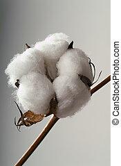 Bola de algodón