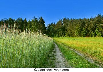 Bonita escena rural