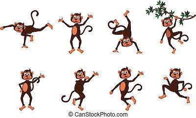 Bonita serie de monos cómicos