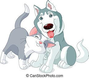 Bonitas mascotas