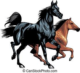Bonitos caballos aislados