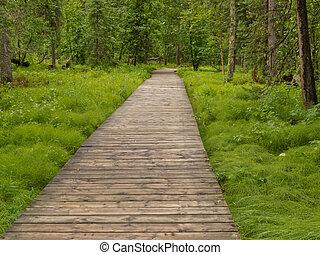 boreal, boardwalk, canadá, norteño, taiga, bosque, ac