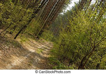 Bosque 1