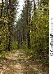 Bosque 1a