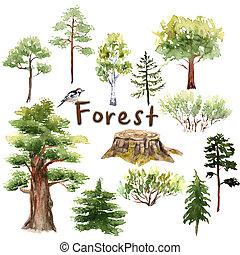 Bosque acuarela: árboles, arbustos, abeto, roble