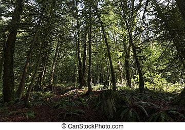 Bosque