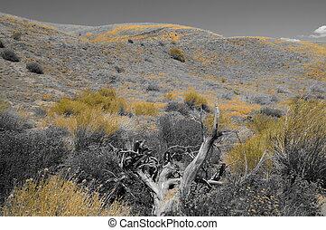 Bosque amarillo del desierto