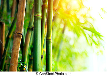 Bosque bambú