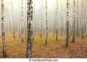 Bosque Birch