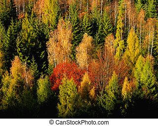 Bosque colorido del otoño