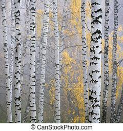 Bosque de arco