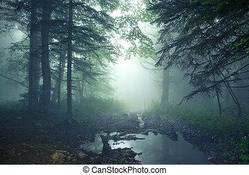 Bosque de fantasía