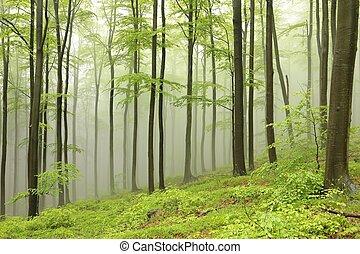 Bosque de habas en la niebla