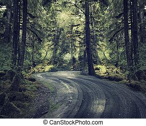 Bosque de lluvia con un camino de tierra