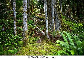 Bosque de Oregón