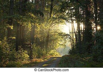 Bosque de otoño al amanecer