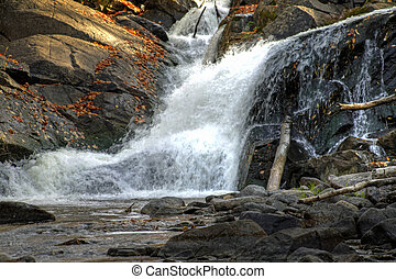 Bosque de otoño y paisaje del río 12