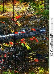 Bosque de otoño y río