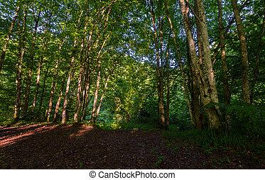 Bosque de verano por la mañana
