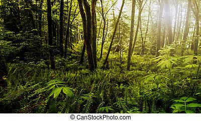 Bosque denso